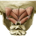 suboccipital muscles - cervicogenic headaches