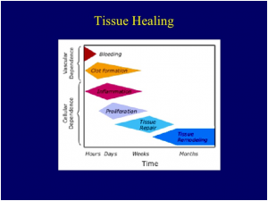 tissue healing stages and self treatment