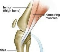 hamstrings action in protecting the acl