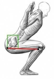 hamstirngs squat