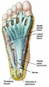 plantar fascia - myofascial release
