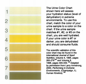 urine analysis dehydration