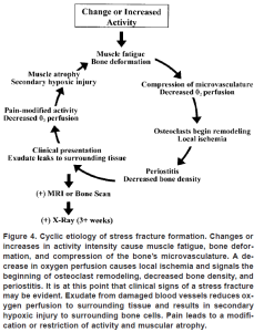 stress fracture cycle